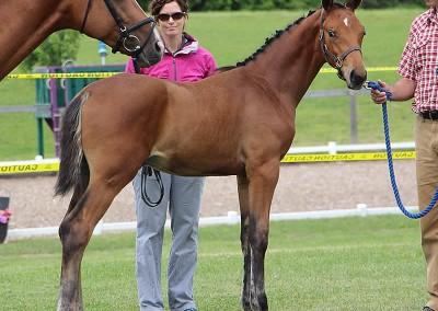Hotrodd from Merrickville Equine