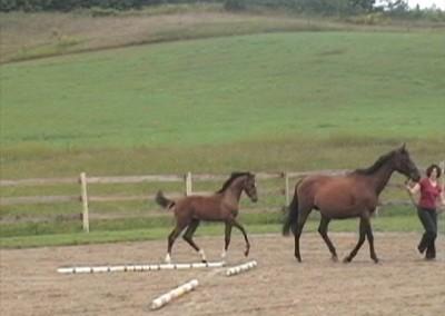 Amor from Merrickville Equine