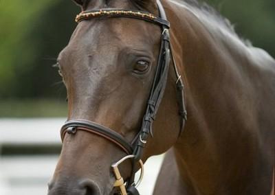 Belrose from Merrickville Equine