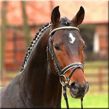 Merrickville Equine Quality Sporthorses