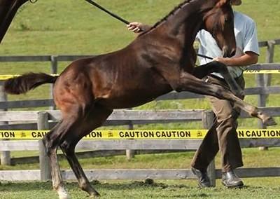 Furstenclass from Merrickville Equine