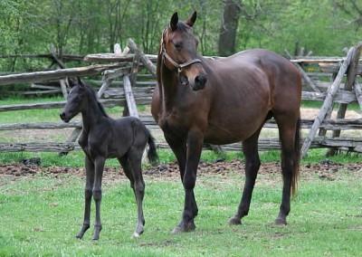 Furstenline from Merrickville Equine