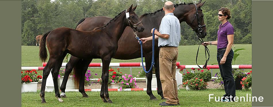 Merrickville Equine presents Furstenline
