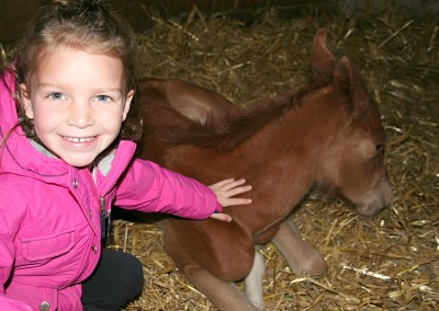 Ruby - Merrickville Equine Farm Photos