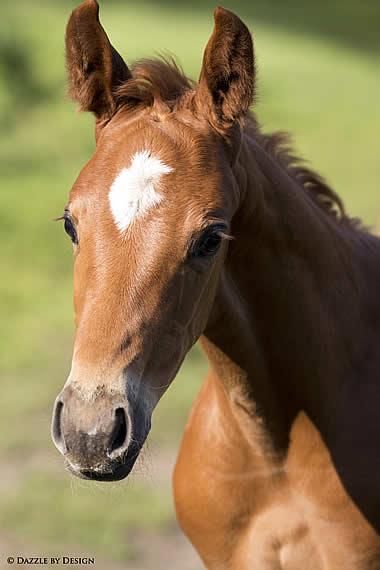 Rubin Royal from Merrickville Equine
